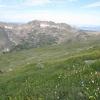 wildflowers_Arapahoe Peak